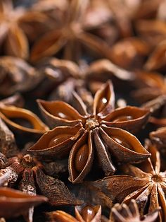 """Illicium verum, commonly called Star anise, star aniseed, or Chinese star anise, (Chinese: 八角, pinyin: bājiǎo, lit. """"eight-horn"""" or """"eight-corners"""") is a spice that closely resembles anise in flavor, obtained from the star-shaped pericarp of Illicium verum, a medium-sized native evergreen tree of northeast Vietnam and southwest China. The star shaped fruits are harvested just before ripening."""