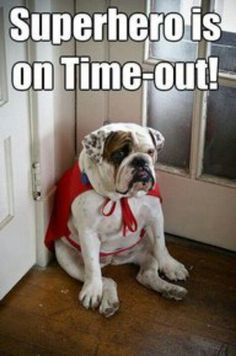 The major breeds of bulldogs are English bulldog, American bulldog, and French bulldog. The bulldog has a broad shoulder which matches with the head. Funny Animal Memes, Dog Memes, Funny Dogs, Funny Animals, Cute Animals, Funny Humor, Dog Humor, Animal Quotes, Funny Stuff