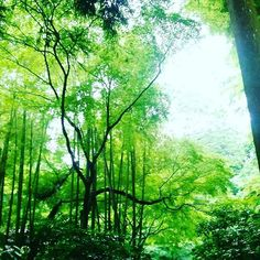 【message_of_spirit】さんのInstagramをピンしています。 《~ message of spirit ~  委ねる  #自然 #nature #natural #スピリチュアル #spiritual #愛 #Love #魂 #soul #癒し #healing #安らぎ #peaceofmind #気づく #realize #notice  #光 #light  #鎌倉 #kamakura #木 #tree  #緑  #green  #森 #forest》