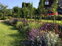 Garden Inspiration, Garden Ideas, Garden Design Images, Vineyard, Gardens, Google Search, Outdoor, Outdoors, Vine Yard