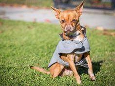 #nkla #dog #adopt #dogs #rescue #losangeles