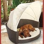 Excellent 115 Best Dog Furniture Images In 2013 Dogs Dog Bed Dog Interior Design Ideas Oxytryabchikinfo