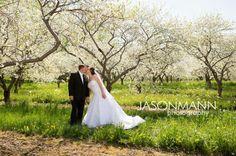 Bridal couple kiss in a cherry blossom forest. Door County wedding sneak peek by Jason Mann Photography 920-246-8106 www,JMannPhoto.com