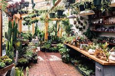 You will find some great office plants ideas for your working space here. We promise we did our best in finding you great office plants ideas… Greenhouse Plans, Greenhouse Gardening, Garden Cafe, Garden Shop, Garden Nursery, Plant Nursery, Hanging Plants, Indoor Plants, Hanging Gardens