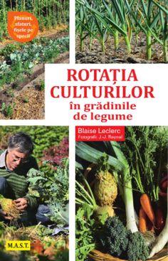 Cultivarea smochinului in Romania - cum procedezi corect? Farm Gardens, Ikebana, Vegetable Garden, Garden Design, Vegetables, Romania, Gardening, Sun, Horticulture