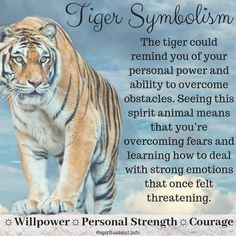 Tiger Spirit Animal In the kingdom of spirit animal, the tiger puts a special emphasis on raw feelings and emotions. The tiger spirit animal symbolizes primal instincts, unpredictability, and ability to trust yourself. Tiger Spirit Animal, Spirit Animal Totem, Animal Spirit Guides, Animal Totems, Animal Meanings, Animal Symbolism, Symbols And Meanings, Spiritual Animal, Spiritual Wisdom