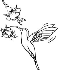 Trendy embroidery animals easy coloring pages Ideas Nursery Drawings, Bird Drawings, Bird Pictures, Pictures To Draw, Bird Coloring Pages, Coloring Books, Hummingbird Painting, Bird Quilt, Stained Glass Patterns