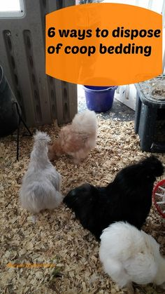 6 ways to dispose of chicken coop bedding. When you clean out the coop, what do you do with all that chicken poop? Here are my 6 ways to dispose of chicken poop. Portable Chicken Coop, Best Chicken Coop, Backyard Chicken Coops, Chicken Coop Plans, Building A Chicken Coop, Chicken Runs, Chickens Backyard, City Chicken, Chicken Lady