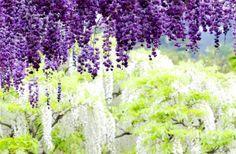 Nádherné květinové tunely | L'amour