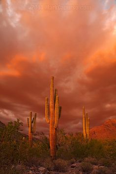 Sonora Desert, Arizona; photo by .Mark Capurso on 500px