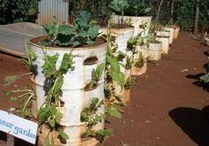 Love this idea for container gardening, a whole veggie garden or herb garden would be great......