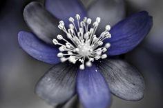Imagenation Flower