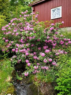 Vil du ta stikling av treaktig busker? Planting, Outdoor Structures, Garden, Stone, Nature, Plants, Garten, Lawn And Garden, Gardens