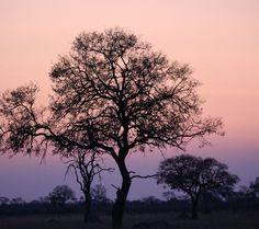 Du magst Kenianischen #Kaffee? Dann wirst du Kaffee aus #Simbabwe lieben ❥ Crake Valley, Pezuru oder doch lieber Matobo? http://bunaa.de/de/simbabwe-2/ http://bunaa.de/en/zimbabwe/