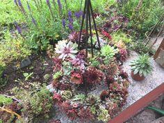 Plants, Succulents, Flora, Plant, Planting