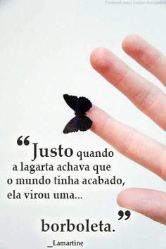 """""""justo quando a lagarta achava que o mundo tinha acabado, ela virou uma borboleta."""" #FrasesAmCo"""