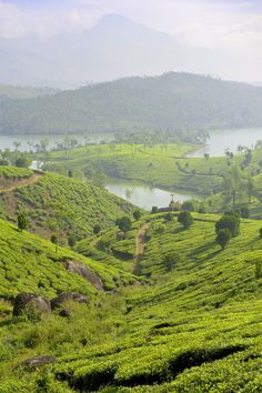 Kerala,  India (by Dennis H. Miller)