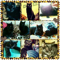 Star, Hoppy and Goober, my the black cat beauties :-)