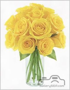 yellow rose .817K2th0hjL._SY450_.jpg