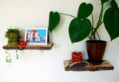 shelves made from slices of wood