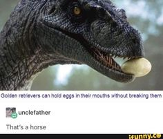 Picture memes iFunny - Penguin Funny - Funny Penguin meme - - Ummm no thats a dragon common knowledge The post Picture memes iFunny appeared first on Gag Dad. Haha Funny, Stupid Funny, Funny Cute, Funny Jokes, Funny Stuff, Random Stuff, Funny Captions, Random Things, Jurrassic Park
