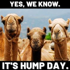 yes we know its hump day memes