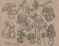 Sheet of mushroom flash for the shop! Mushroom Drawing, Mushroom Art, Flash Art, Cool Art Drawings, Art Sketches, Tattoo Studio, Mushroom Tattoos, Desenho Tattoo, Pop Art