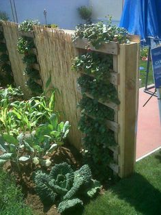 DIY Vertical Pallet Garden-like the incorporating of the reed fencing