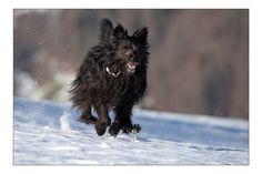 Bessy Panther, Dogs, Animals, Doggies, Animais, Animales, Animaux, Animal, Pet Dogs