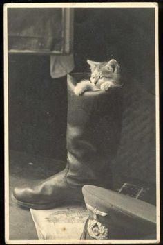 Puss in Das Boot. German WWII soldier hat and boot with kitten. German Soldiers Ww2, German Army, Funny Animals, Cute Animals, Animals And Pets, Owning A Cat, Vintage Cat, World War Two, Historical Photos