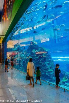 The Dubai Aquarium and Underwater Zoo in the Dubai Mall