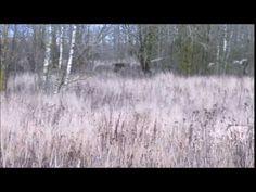 Nurmkanad fosforiidimaal - YouTube Snow, Youtube, Outdoor, Outdoors, Outdoor Games, The Great Outdoors, Youtubers, Eyes, Youtube Movies