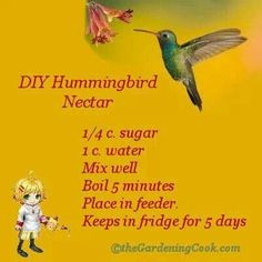 Why pay for hummingbird nectar at the retail stores when it is so easy to make yourself? DIY Hummingbird Nectar: Combine c. Hummingbird Nectar, Hummingbird Garden, Hummingbird Feeder Food, Hummingbird Water Recipe, Hummingbird Habitat, Diy Garden, Lawn And Garden, Garden Ideas, Hillside Garden