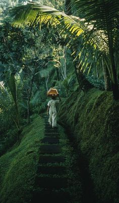 A lush estate leading to a #tropical rain #forest near the Ayung River, #Bali, #Indonesia. Photo by Justin Guariglia.