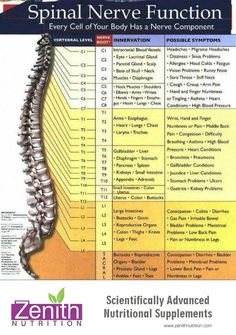 Spinal Nerve Function | Zenith Nutrition