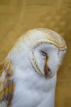 This Owl is stunning!!