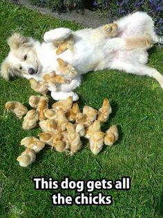Animal magnetism!