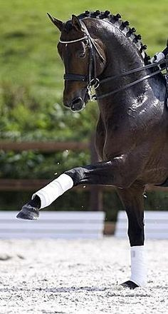 Dressage. You can see how much of a work out it is because the horse is drenched in sweat.
