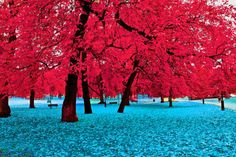 Love, Love,Love the contrast in colors