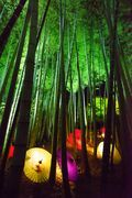 高台寺 竹林 Grove, Colour Light, Light Therapy, Nippon, My World, Sony, Bamboo, Beautiful Places
