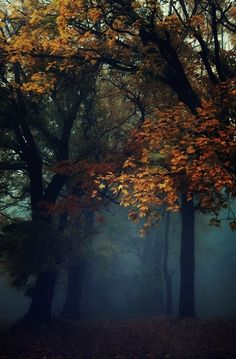 christopher-j-rutty:  Fall is still sticking around.