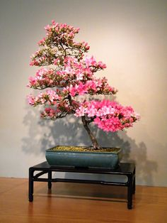 Satsuki Azalea on special exhibition at the National Bonsai & Penjing Museum.