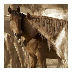 Horses Amour Art Print at AllPosters.com