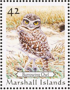 Burrowing Owl stamps - mainly images - gallery format