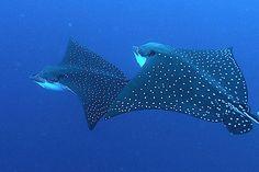 Galapagos diving.