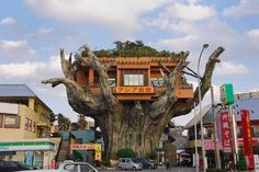 Crazy Banyan Treehouse Cafe in Japan