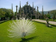 Isola Bella Lake Maggiore weddings, splendid and magnificent Baroque Italian garden, wedding at Isola Bella Lake Maggiore Italy. Beautiful Sites, Beautiful Islands, Beautiful Pictures, Places In Italy, Places To See, Places Around The World, Around The Worlds, Lake Maggiore Italy, Wedding Venues Italy