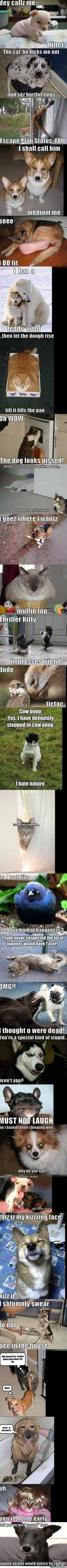 Usually I don't like the animal caption pics, but these captions are silly! Lol