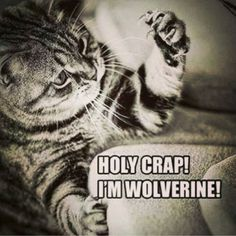 """69 Likes, 6 Comments - Jesse Grillo (@jesse_grillo) on Instagram: """"#wolverine #kitty"""""""