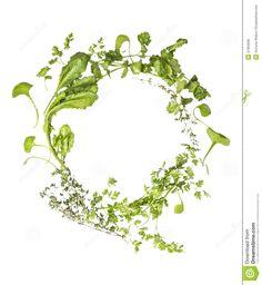 Wilde Kruidenkroon Op Witte Achtergrond - Downloaden van meer dan 53 Miljoen hoge kwaliteit stock foto's, Beelden, Vectoren. Schrijf vandaag GRATIS in. Afbeelding: 47955695